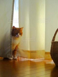 猫の写真・画像素材[3126342]