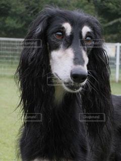 犬 - No.122325