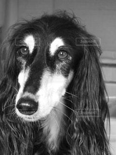 犬 - No.122326