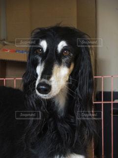 犬 - No.122328