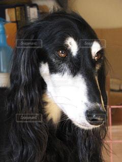 犬 - No.122331
