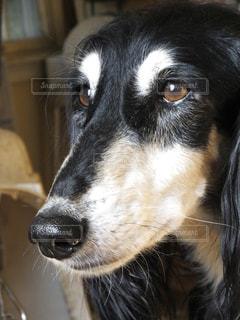 犬 - No.122333