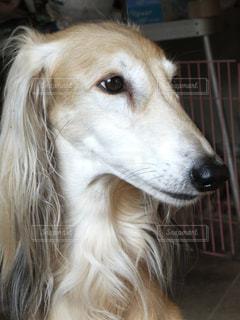 犬 - No.122417