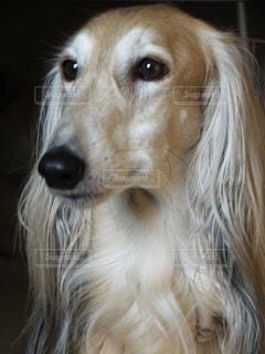 犬 - No.122419