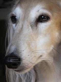 犬 - No.122420