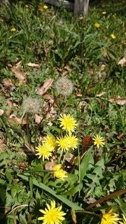 草の中の黄色い花の写真・画像素材[3112058]