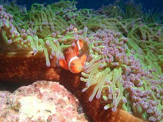 魚のクローズアップの写真・画像素材[3113603]