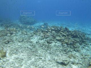 サンゴの水中眺めの写真・画像素材[3114064]