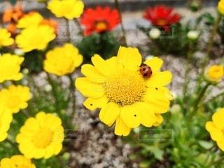 花とてんとう虫の写真・画像素材[3168002]