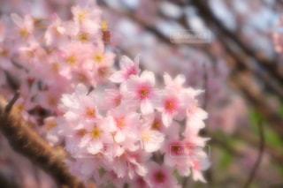 花のクローズアップの写真・画像素材[3119712]