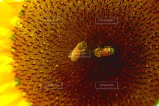 近くの花のアップの写真・画像素材[1295248]