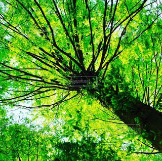 自然の写真・画像素材[127307]