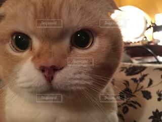 猫 - No.132870