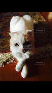 猫の写真・画像素材[132880]