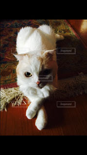 猫 - No.132880