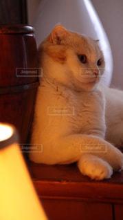 猫の写真・画像素材[136907]