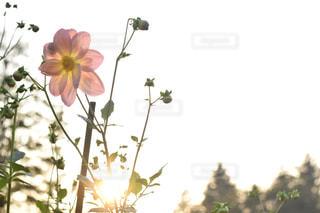 自然の写真・画像素材[130876]