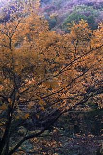 秋の紅葉 森の写真・画像素材[3156208]