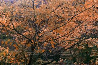 秋の紅葉 森の写真・画像素材[3156223]