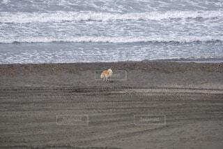 海辺 野良犬の写真・画像素材[4012427]