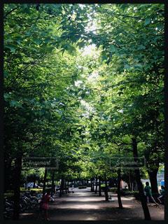 公園のベンチの眺めの写真・画像素材[3121186]