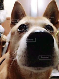 犬の写真・画像素材[123431]