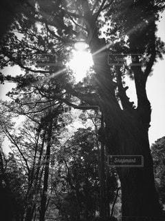 木のクローズアップの写真・画像素材[3132722]