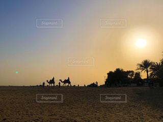 砂漠に沈む夕日に映るラクダの写真・画像素材[3129778]