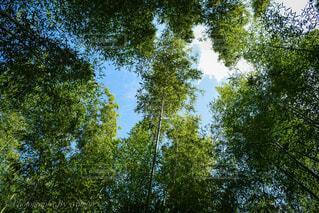 竹林の写真・画像素材[3121344]
