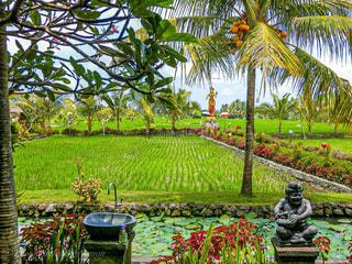 バリ島の田園風景の写真・画像素材[3122062]
