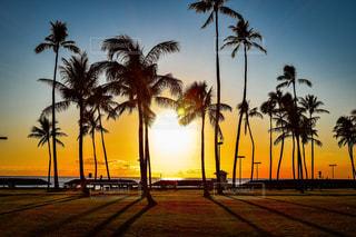 夕焼けの前にヤシの木の写真・画像素材[3124829]