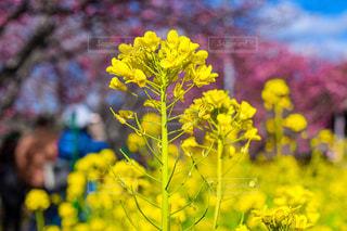 花のクローズアップの写真・画像素材[3124943]
