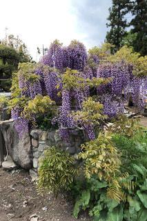 庭の植物の写真・画像素材[3122775]