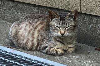 眠っている猫の写真・画像素材[3122772]