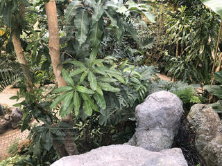岩の上のヤシの木のグループの写真・画像素材[3122804]