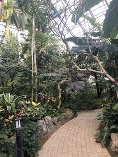 庭の大きな木の写真・画像素材[3122808]