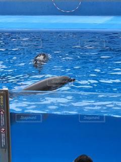 水の中を泳ぐ動物の写真・画像素材[3122811]