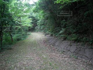 森の中の土の道の写真・画像素材[3122796]