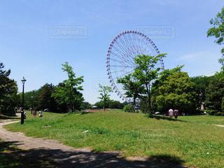 公園から見える観覧車の写真・画像素材[3138538]