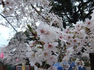 花のクローズアップの写真・画像素材[3138540]