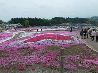芝桜公園の写真・画像素材[3138547]