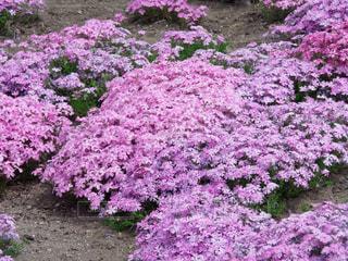 花のクローズアップの写真・画像素材[3138558]