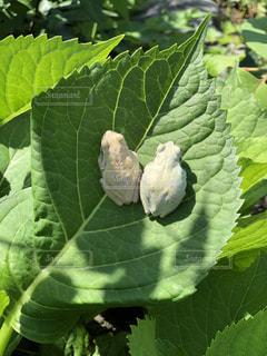夫婦蛙の写真・画像素材[3261959]