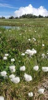 晴れた日に草を食べる羊のグループの写真・画像素材[3126032]