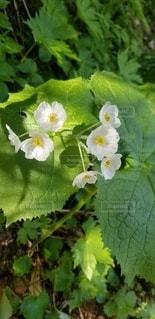 白い花の写真・画像素材[3126044]