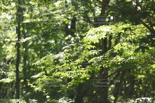 森の中の写真・画像素材[3126413]