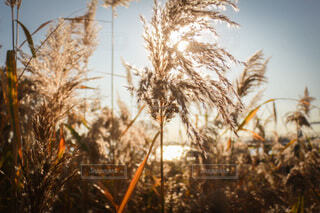 植物のクローズアップの写真・画像素材[3888124]