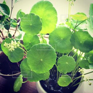 近くの植物のアップの写真・画像素材[780630]
