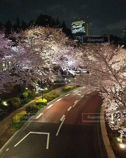 ミッドタウンの桜の写真・画像素材[3129017]