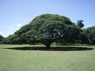 ハワイの写真・画像素材[138981]